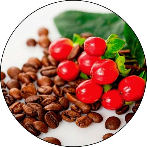 צמח הקפה